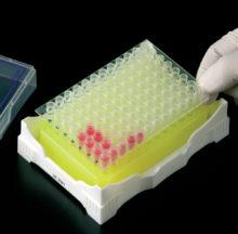 Gradeta IsoFreeze per PCR amb gel refrigerant indicador de temperatura